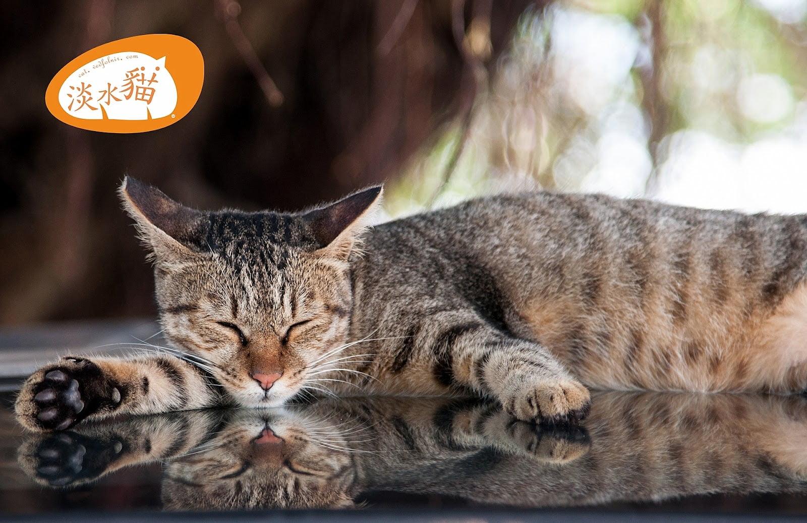 在淡水河岸的老街停車場上巧遇虎斑貓 淡水攝影 tiger cat sleep on car at tamsui old street riverside 1