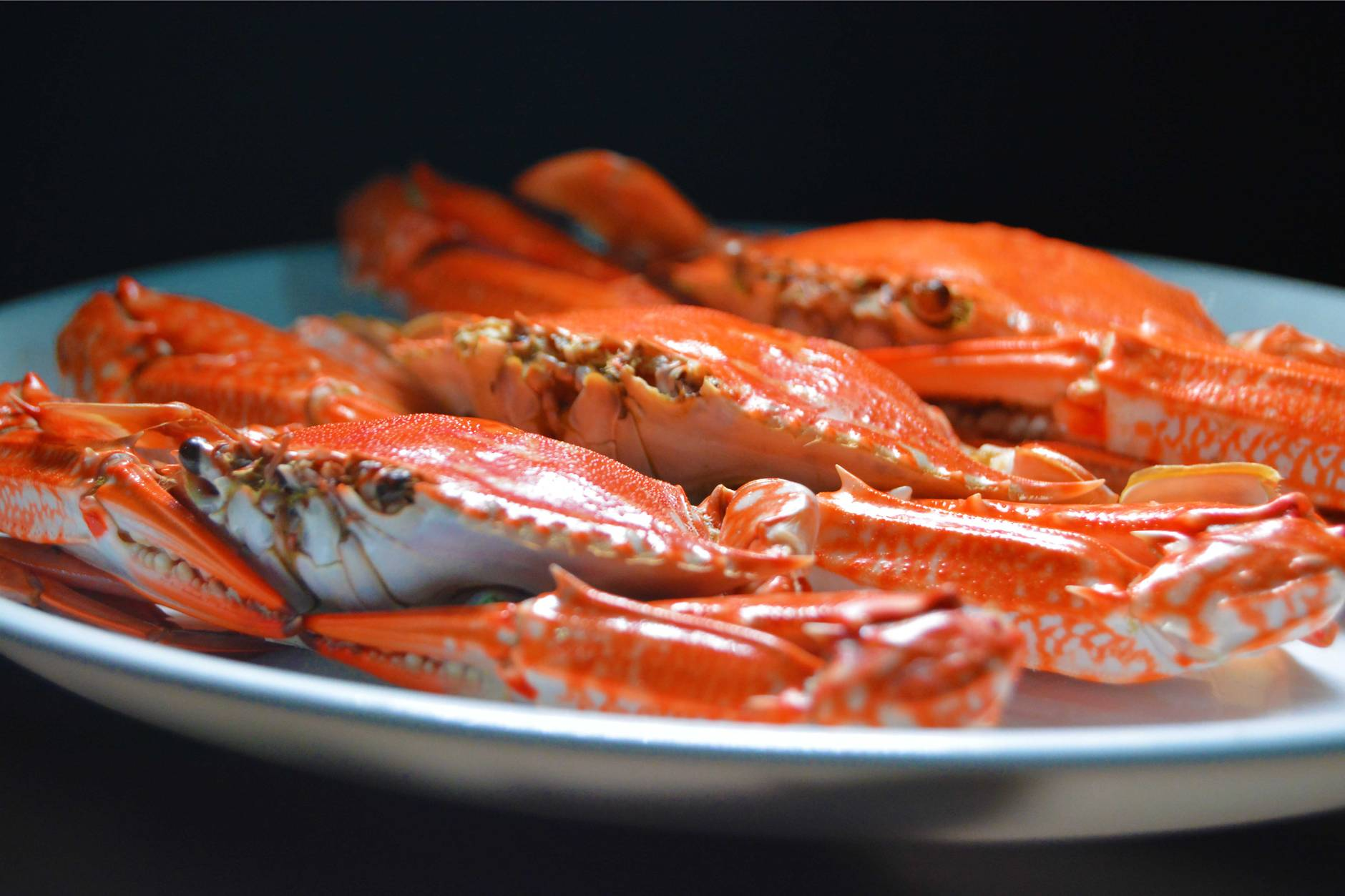 crab on a white ceramic plate